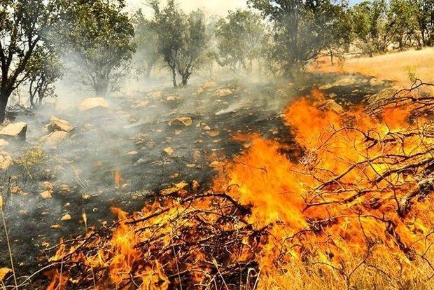 وقوع 11 مورد حریق مراتع و پوشش گیاهی طی یک روز در همدان