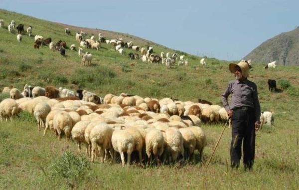خبرنگاران یک میلیون هکتار مراتع ییلاقی استان سمنان برای تعلیف دام اختصاص یافت